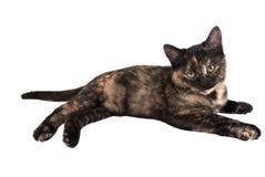 白棉布小猫 免版税库存图片
