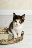 白棉布小猫 库存图片