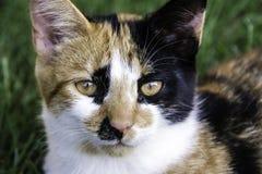 白棉布小猫 免版税库存照片