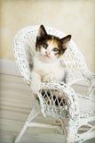 白棉布摆在柳条的椅子小猫 免版税库存图片