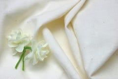 白棉布欢呼早期的jonquil 库存照片