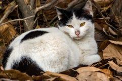 白棉布迷路者猫 图库摄影