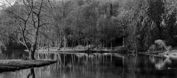 黑白森林 图库摄影