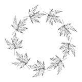 黑白槭树离开框架 免版税库存照片