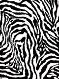 黑白毛皮斑马样式 图库摄影
