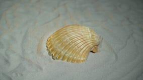 白海壳在白色沙子在转盘放置转动 影视素材