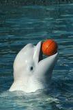 白海豚鲸鱼 免版税库存照片