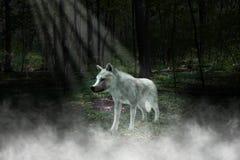 白狼,森林,森林例证 库存图片