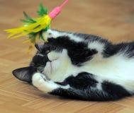 黑白猫使用 免版税库存图片