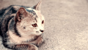 黑白猫坐具体背景 库存照片
