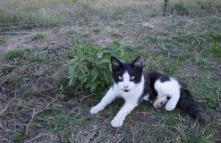 黑白猫Lounging由植物 免版税库存图片