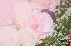 白玫瑰和桃红色选择聚焦 图库摄影