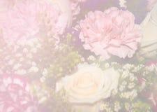 白玫瑰和桃红色选择聚焦 免版税图库摄影