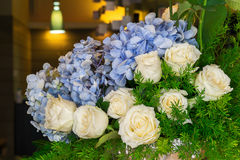 白玫瑰和蓝色八仙花属 免版税图库摄影