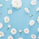 白玫瑰圆的框架在蓝色背景开花 平的位置,顶视图 背景细部图花卉向量 免版税库存图片