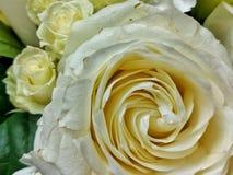 白玫瑰在更小的丝毫玫瑰中关闭 库存图片