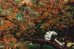 白玫瑰新娘花束与一条金丝带的在一条棕色长凳 库存图片