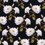 白玫瑰灌木水彩无缝的样式 库存照片