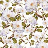 白玫瑰灌木水彩无缝的样式 免版税库存照片