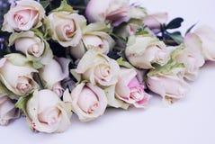 白玫瑰,在thecorner的减速火箭的tonted照片桃红色花玫瑰 库存照片