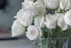 白玫瑰 库存图片