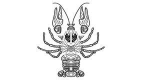 黑白生气蓬勃的图画,部族小龙虾,巨蟹星座有用当占星标志,美食术标志,作为malig的标志的癌症 向量例证