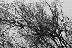 黑白的大树枝 库存照片