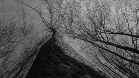 黑白的树 免版税库存照片