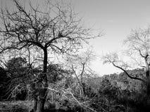 黑白的树 库存照片