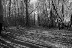 黑白的森林 免版税库存图片
