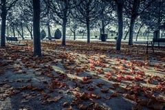 黑白的秋天公园与在颜色的下落的叶子 免版税库存照片