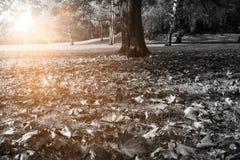 黑白的秋天公园 免版税库存图片