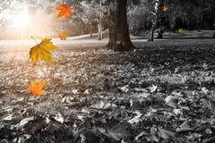 黑白的秋天公园 免版税库存照片