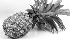 黑白的菠萝 库存照片