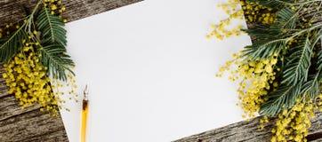 白皮书嘲笑与黄色开花含羞草和葡萄酒笔墨水在灰色木背景 库存图片