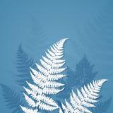 白皮书在蓝色背景的蕨叶子 库存照片