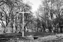 黑白神秘的森林 库存图片