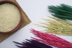白米和稻在白色背景 免版税库存图片