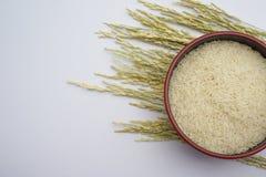 白米和稻在白色背景 库存照片