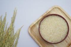 白米和稻在白色背景 免版税库存照片