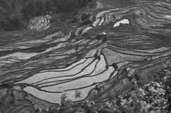 黑白米领域 免版税库存图片