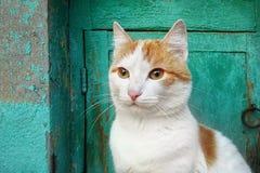 白红色猫特写镜头坐关于老绿色木门的osits 免版税库存照片
