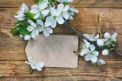 白纸一个开花的李子的标记和分支 图库摄影