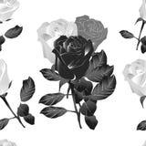 黑白美丽的玫瑰 库存例证