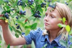 白肤金发的女孩挑选蓝莓 免版税库存照片