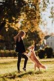 白肤金发的女孩火车她的狗博德牧羊犬在绿色公园在阳光下 免版税库存照片