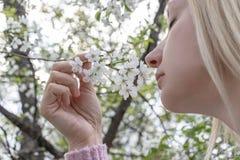 白肤金发的妇女嗅到的白色樱桃花在春天庭院 免版税库存照片