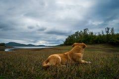 白肤金发的狗观看的湖视图 免版税图库摄影