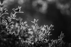 黑白自然背景 免版税库存照片