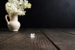 白色丁香一朵花在焦点在木背景与 免版税库存照片